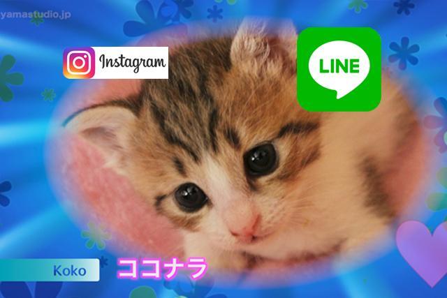 LINEで送る「私のペット」紹介動画を制作します ペットの写真Best5をランキング形式の動画に編集します!