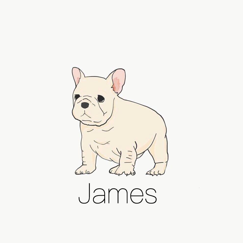 ペットの似顔絵描きます アイコン・贈り物・ウェルカムボードに!