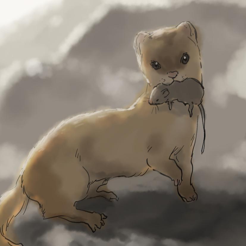ペットの似顔絵を描きます ペットのイラストが欲しい方に!
