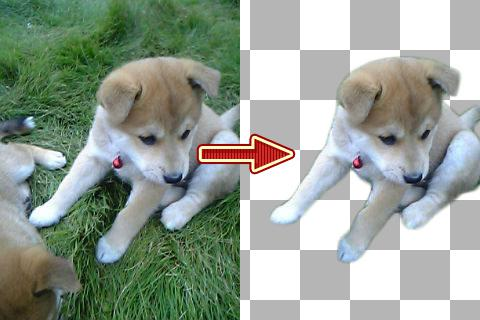 写真から対象物を綺麗に切り抜きます 写真を切り抜いて使いたい方へ3枚まで同じ値段!