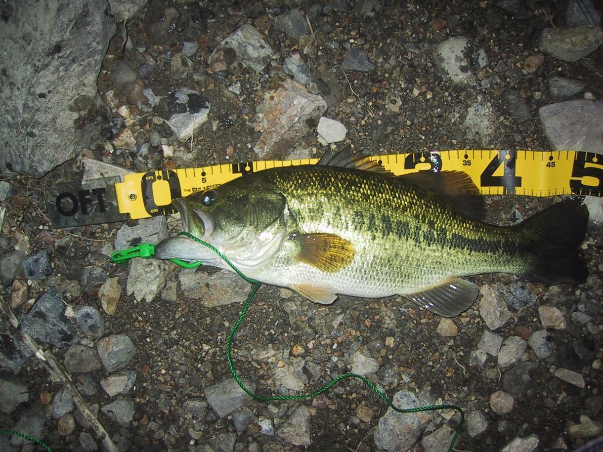 釣りを始めたい人、もっと釣りたい人へお勧めします 基本に立ち返った「釣れるヒント」を納得するまで提供します。 イメージ1