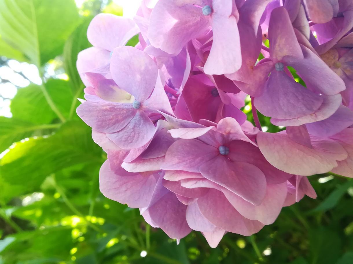 初夏の花の写真を10枚セットで提供します 鮮やかで儚い色に心を委ねてみてください