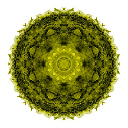 紋様的な円のアイコンを描きます