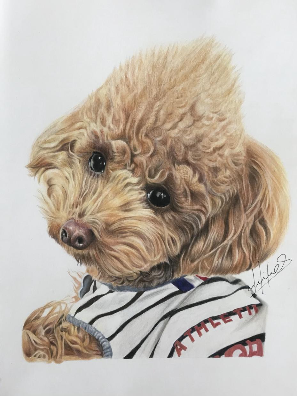 お写真からペット肖像画を色鉛筆で描きます ご自宅用、お友達へのプレゼントにいかがでしょうか