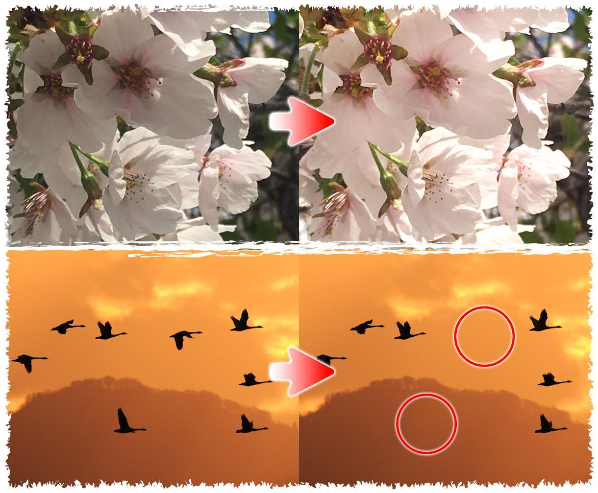 Photoshopで簡単な写真加工いたします ちょっとした加工でキレイな写真に♪明るさの調整や白抜きなども