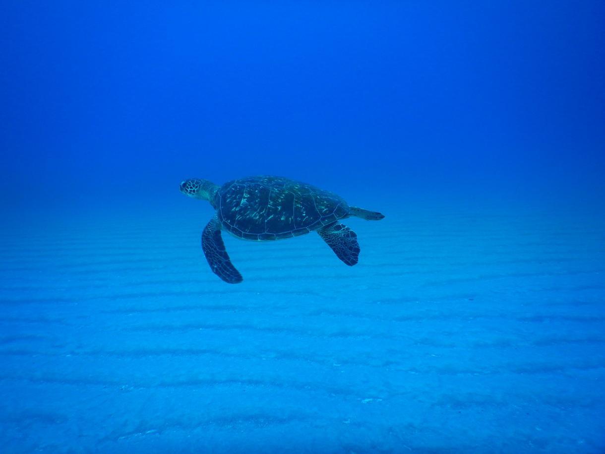 ダイビング初心者の疑問にお答えします 講習って何やるの?わからないことはサクっと聞いちゃえ!