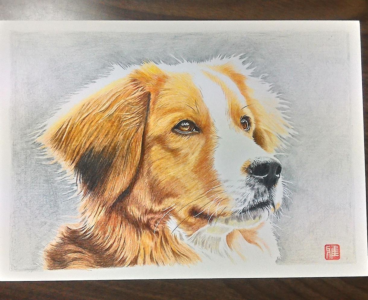 写真をもとにペット(人物も)の似顔絵を描きます ペット、人物など色鉛筆でA3サイズに描きます。 イメージ1