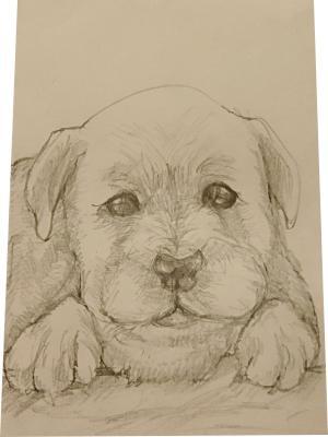 味のある鉛筆画描きます ご自身のSNSや大切な方への贈り物にいかがですか