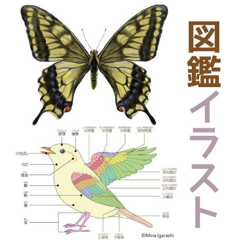 図鑑風のリアルなイラストや図解を制作いたします 動物、生き物全般、植物(ボタニカルアート)もご相談ください イメージ1