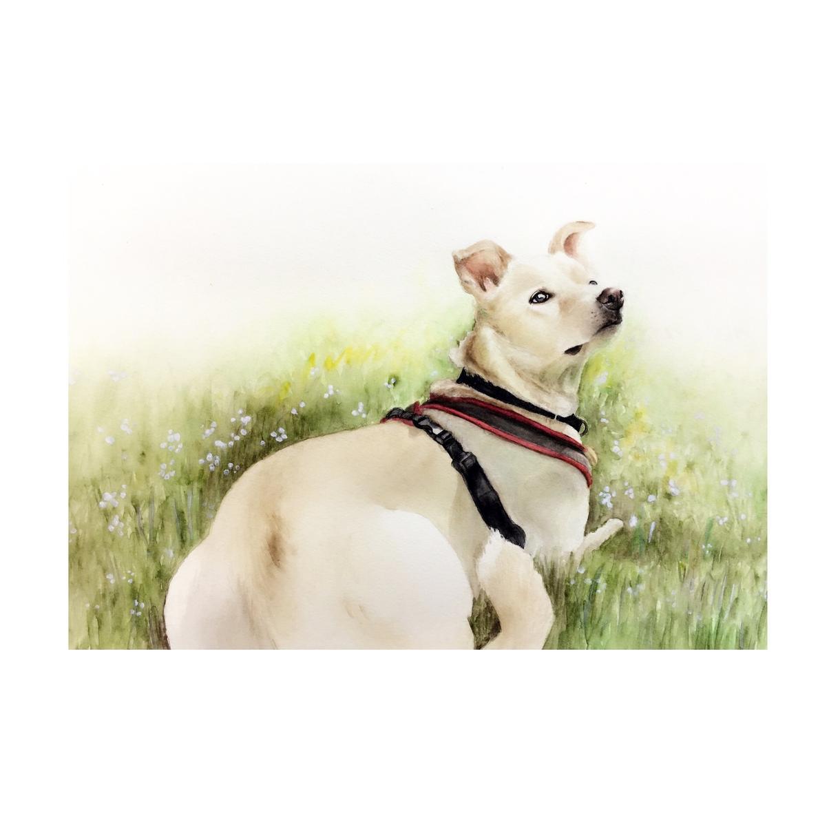 ペットやお好きな動物の似顔絵イラストを描きます プレゼントやペットとの思い出にいかがですか?