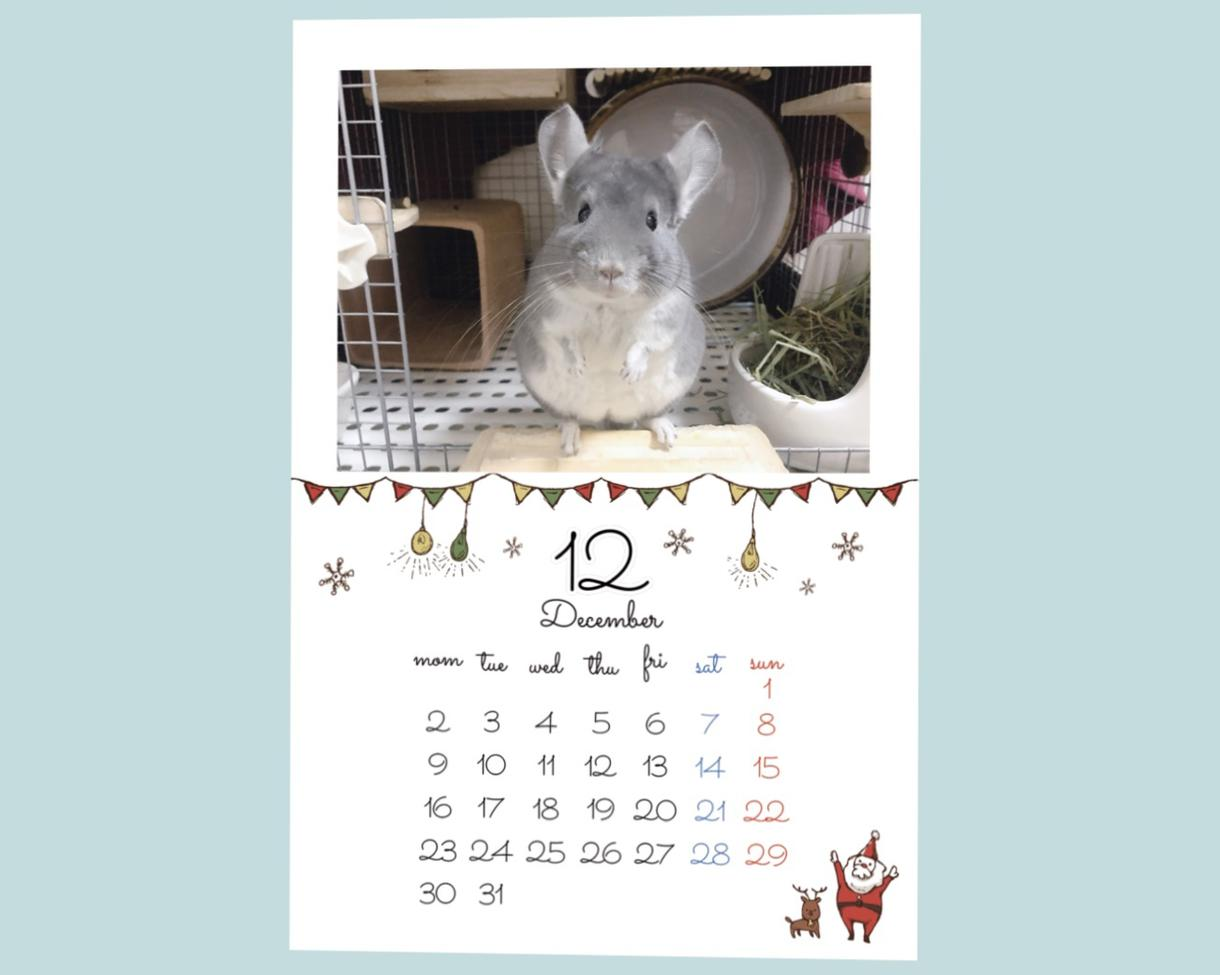 可愛いペットのオリジナルカレンダーを作成します 自慢のうちの子の写真をカレンダーにしてみませんか?