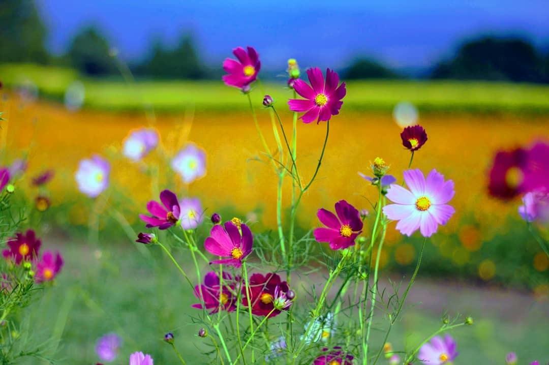 季節の写真お届けします 四季折々の日本の風景をお届けします