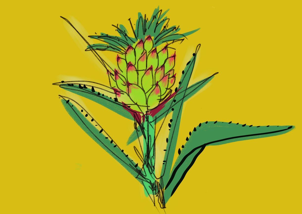 手書きの生命力あふれる植物イラストを描きます 絵本、チラシなどにいかがでしょうか。