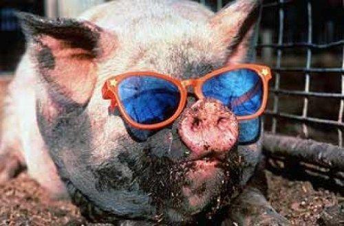 思わずぷっと笑える動物写真を集めてきます 【豚1】なぜか腹筋崩壊しちゃう可愛い動物写真キュレーション イメージ1