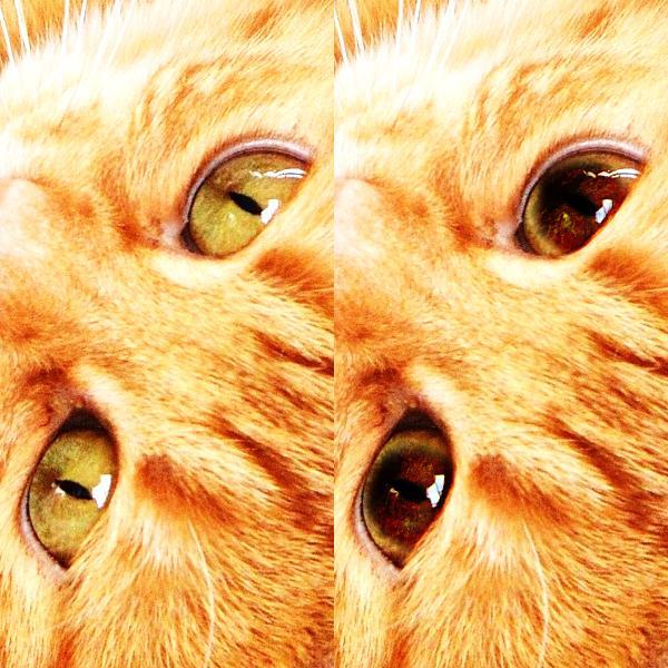 猫ちゃんの写真修正★瞳孔デカ目★にします うちの子もっとスゴイんです!惜しい写真を自慢の一枚に