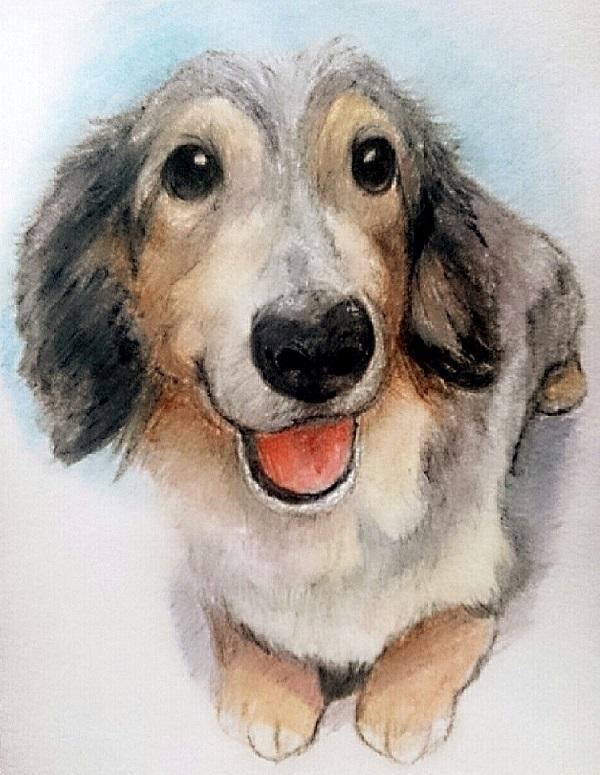 期間限定 ペット色鉛筆画描きます プレゼントや思い出作りに温もりのある一枚をどうぞ。