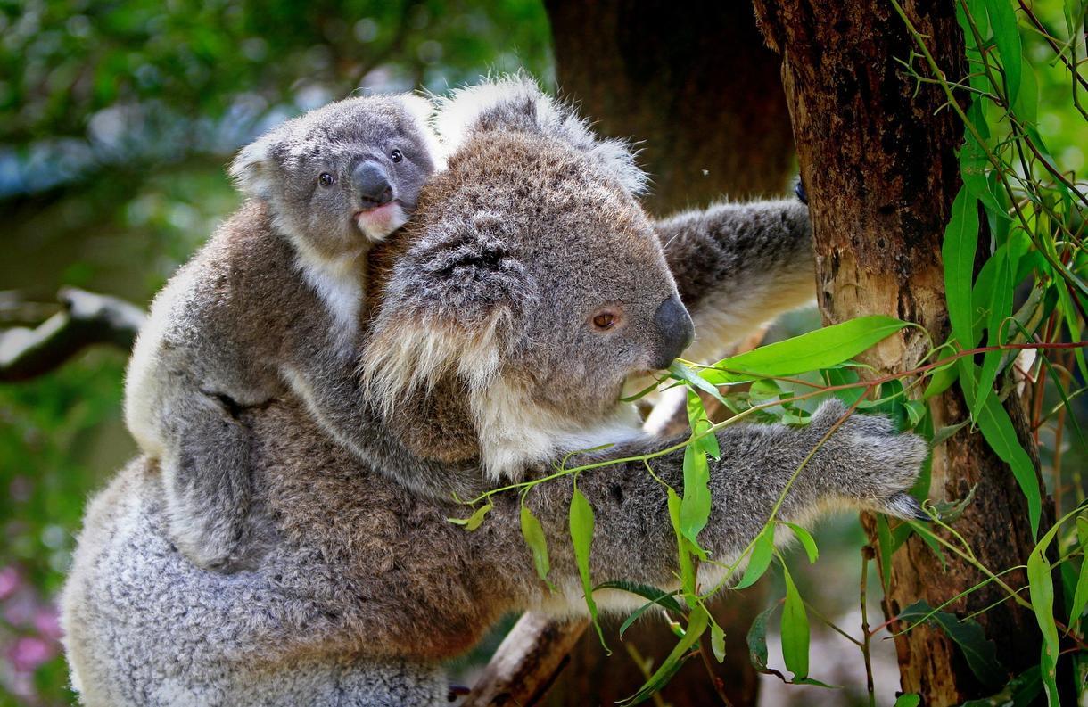 オーストラリアのリサーチ代行します オージーライフの最新情報をお届けします! イメージ1