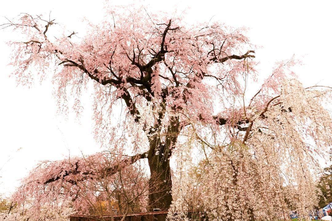 出張撮影・土日祝日 日本全国各地へ出張いたします 写真の編集加工もご要望に合わせていたします!