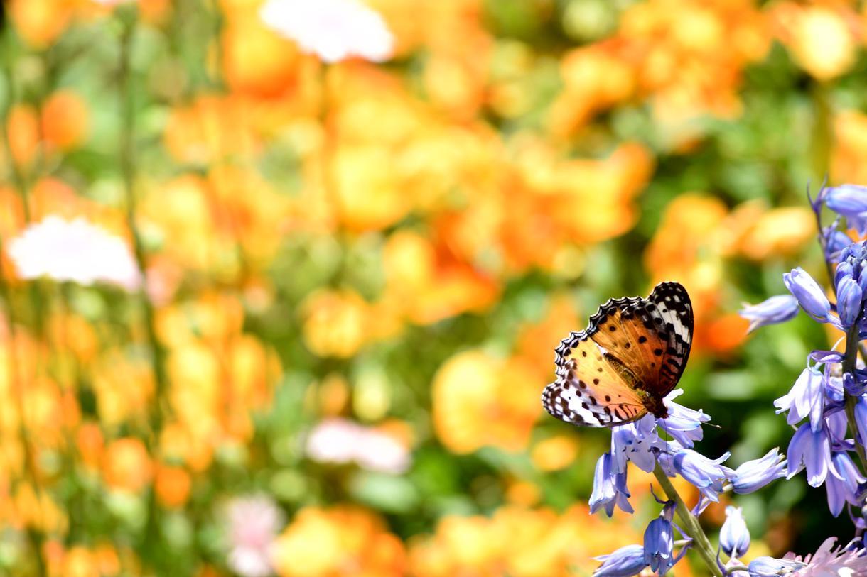 写真提供します 花や景色など一眼レフで撮ったものを提供します。