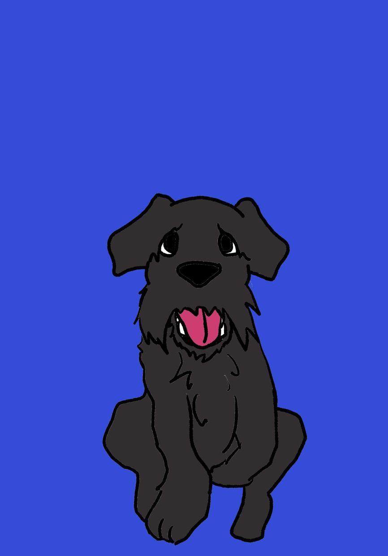 あなたのペット描かせていただきます ペット大好きさんへ!動物描きます!