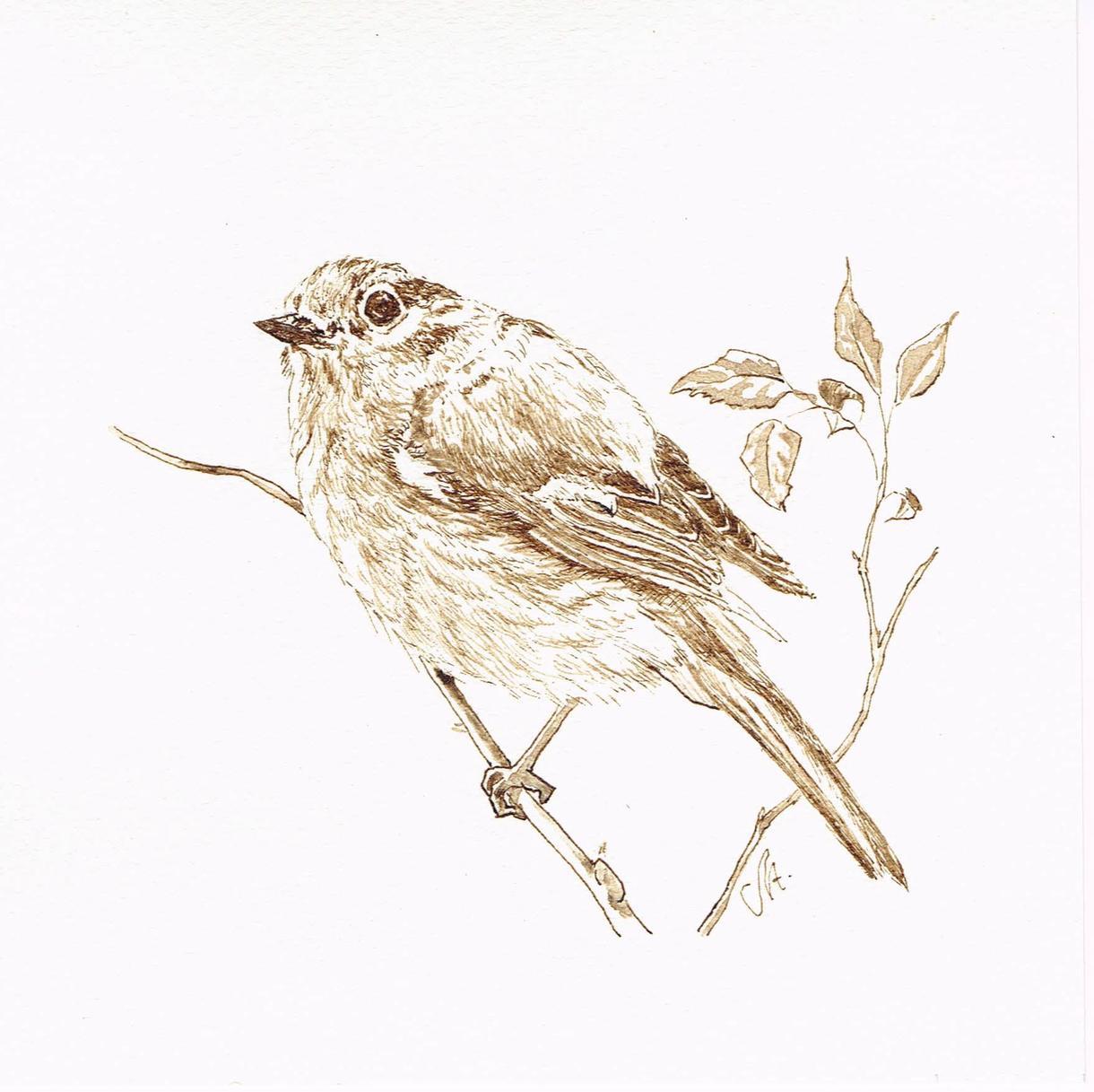 ジョウビタキの手描きインク画をお求め頂けます 鳥の挿し絵、イラストをお部屋に一枚いかがですか