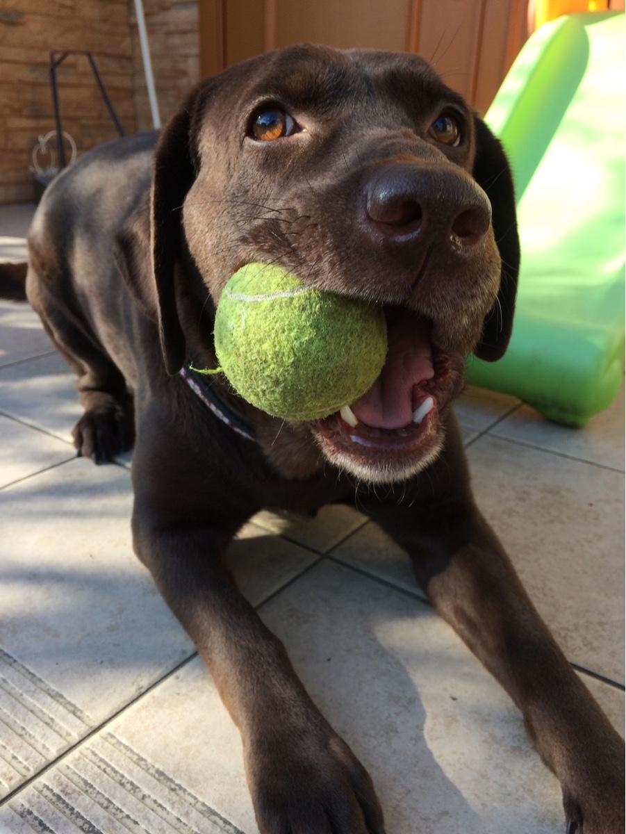 飼い犬の事で困っている方相談にのります 犬の飼い方や世話などで悩んでいる方
