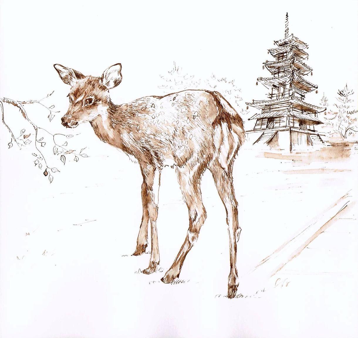 奈良の鹿のインク画ご購入いただけます ご自宅やオフィスのインテリアに一枚いかがでしょうか
