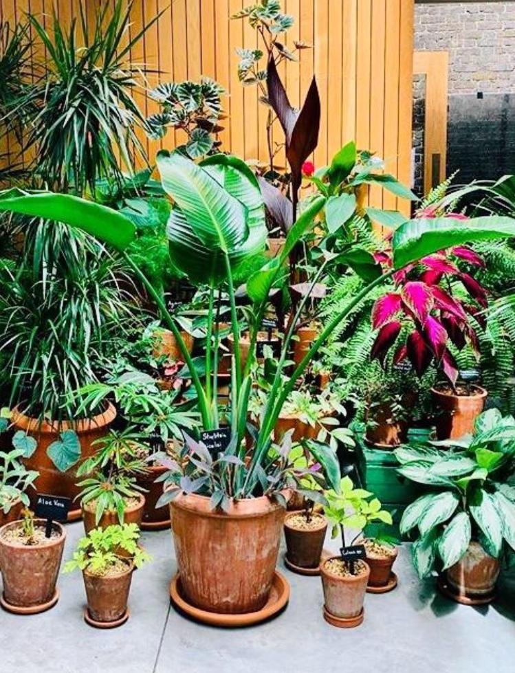 園芸ガーデニング、あらゆる植物のアドバイス致します 観葉植物や多肉植物など植物全般の事をプロが全て解決します! イメージ1