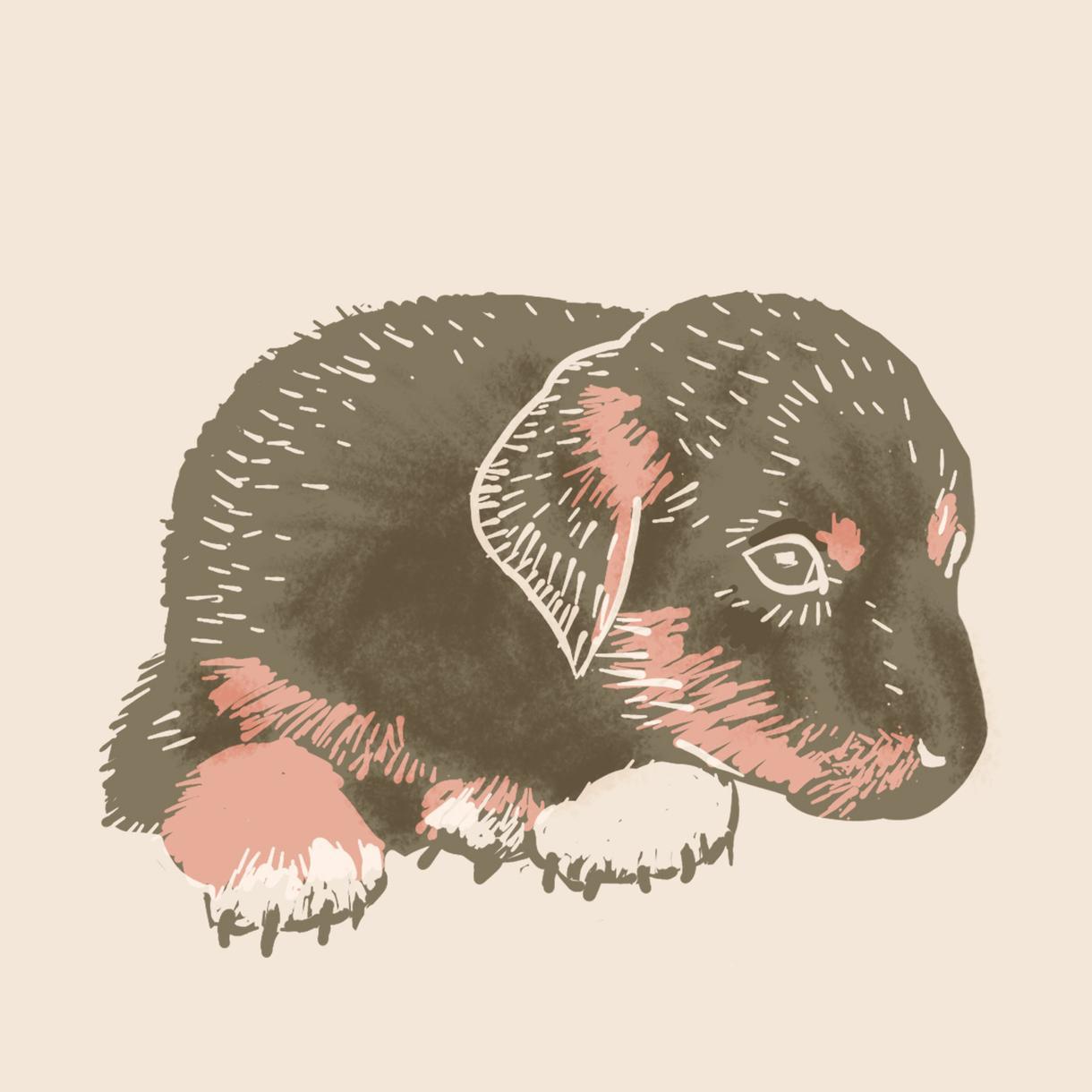 大切なペットや好きな動物の絵を描きます プレゼント用や思い出記念としていかがでしょうか