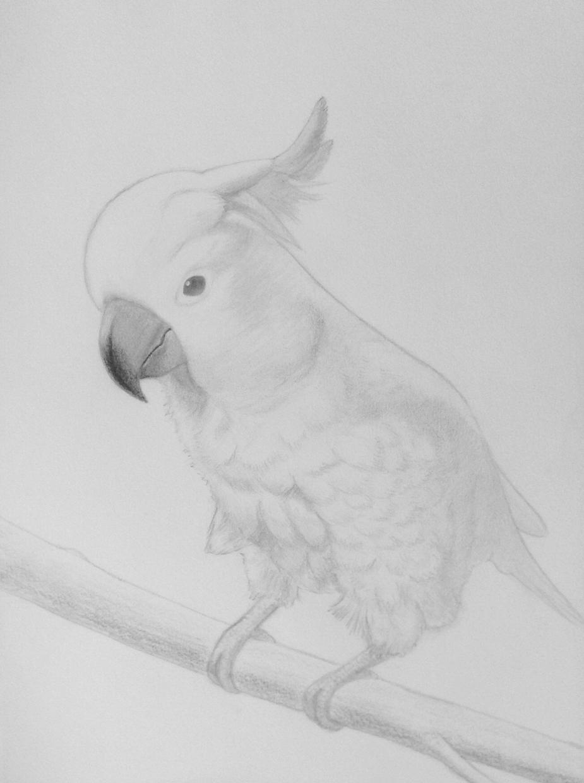 鉛筆で優しい雰囲気の似顔絵描きます。