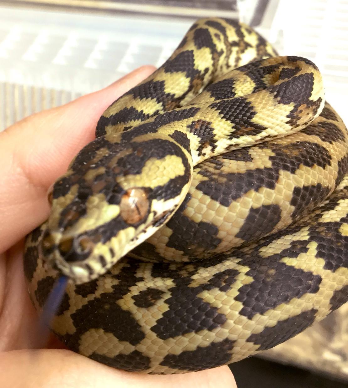 爬虫類のお悩みご相談お伺い致します 特殊なペット「爬虫類」の飼育方法アドバイス致します