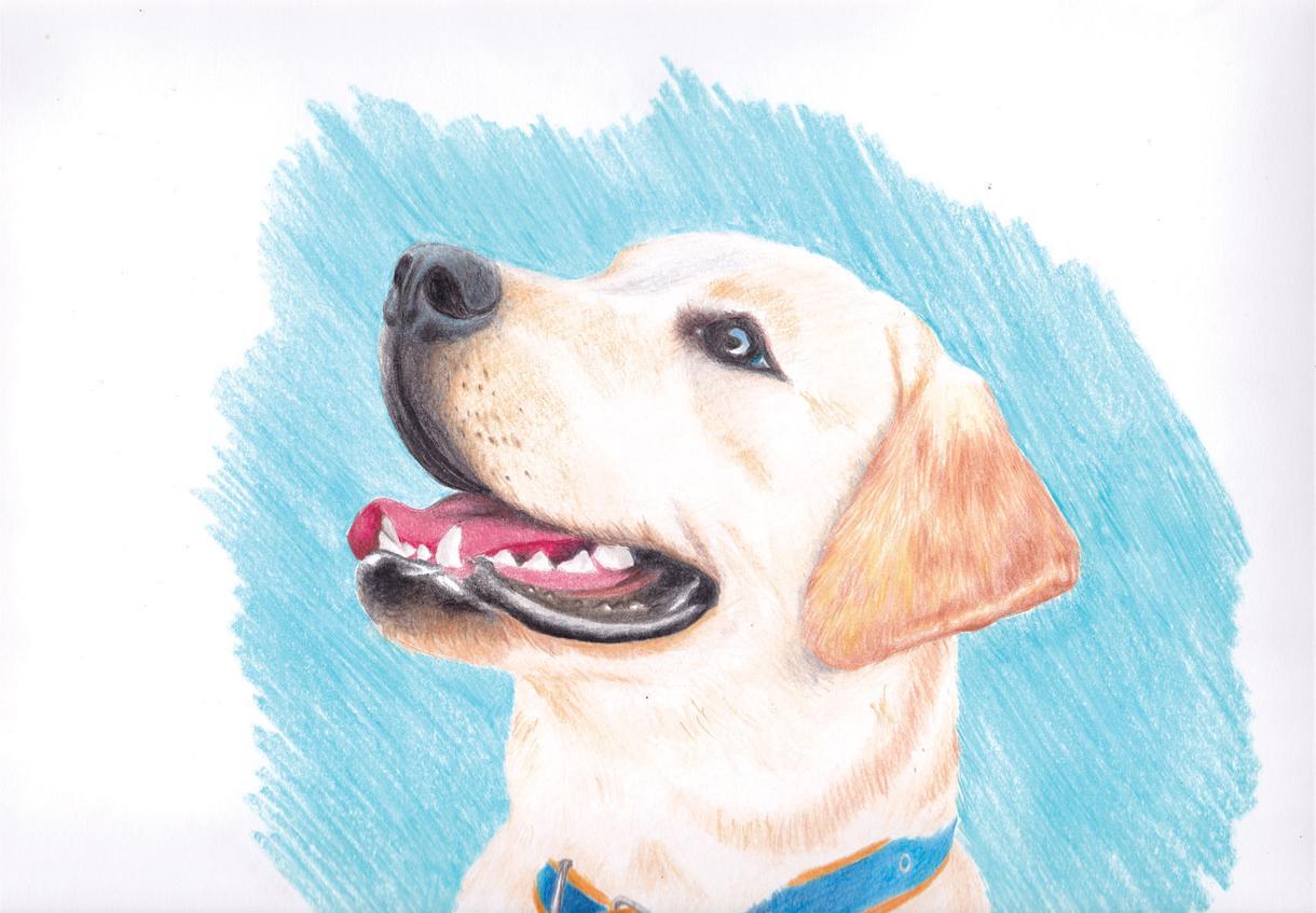 ペットや動物のリアル似顔絵を描きます リアル動物画ならなんでもご相談