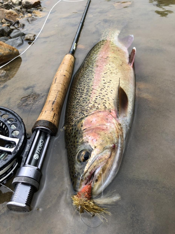 釣れるフライの巻き方教えてます ニジマス 北海道〜レインボートラウト攻略〜 虹鱒