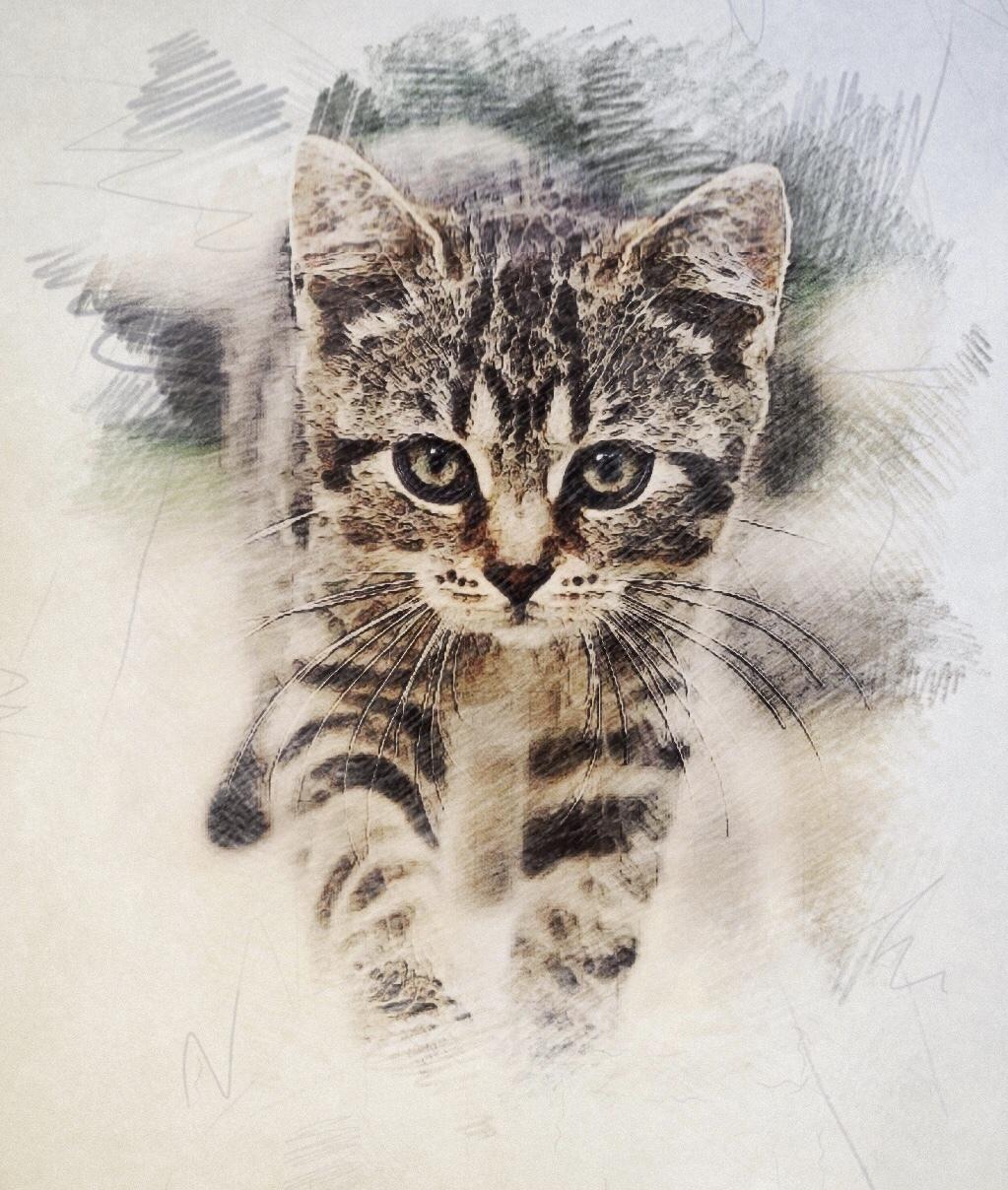 期間限定3枚まで♪】写真を色鉛筆タッチに仕上げます お気に入りの写真をもっと魅力的に♪ペットや風景の写真もOK☆