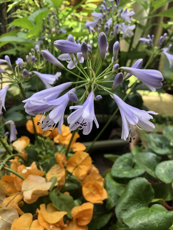 お庭の植物育てかたや病気など見ます 園芸店で働いている知識活かしあなたのお庭を素敵にします! イメージ1