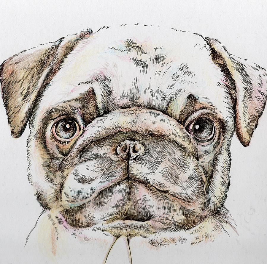 大切なペット(様々な動物)を手描きでお描きします 贈り物に、記念日に。写真とは違ったあたたかみのあるイラストを