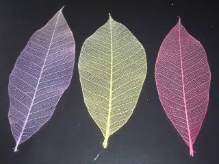 透け感が美しい葉脈標本を作成します ハーバリウムなどインテリアの作成などにどうぞ♪