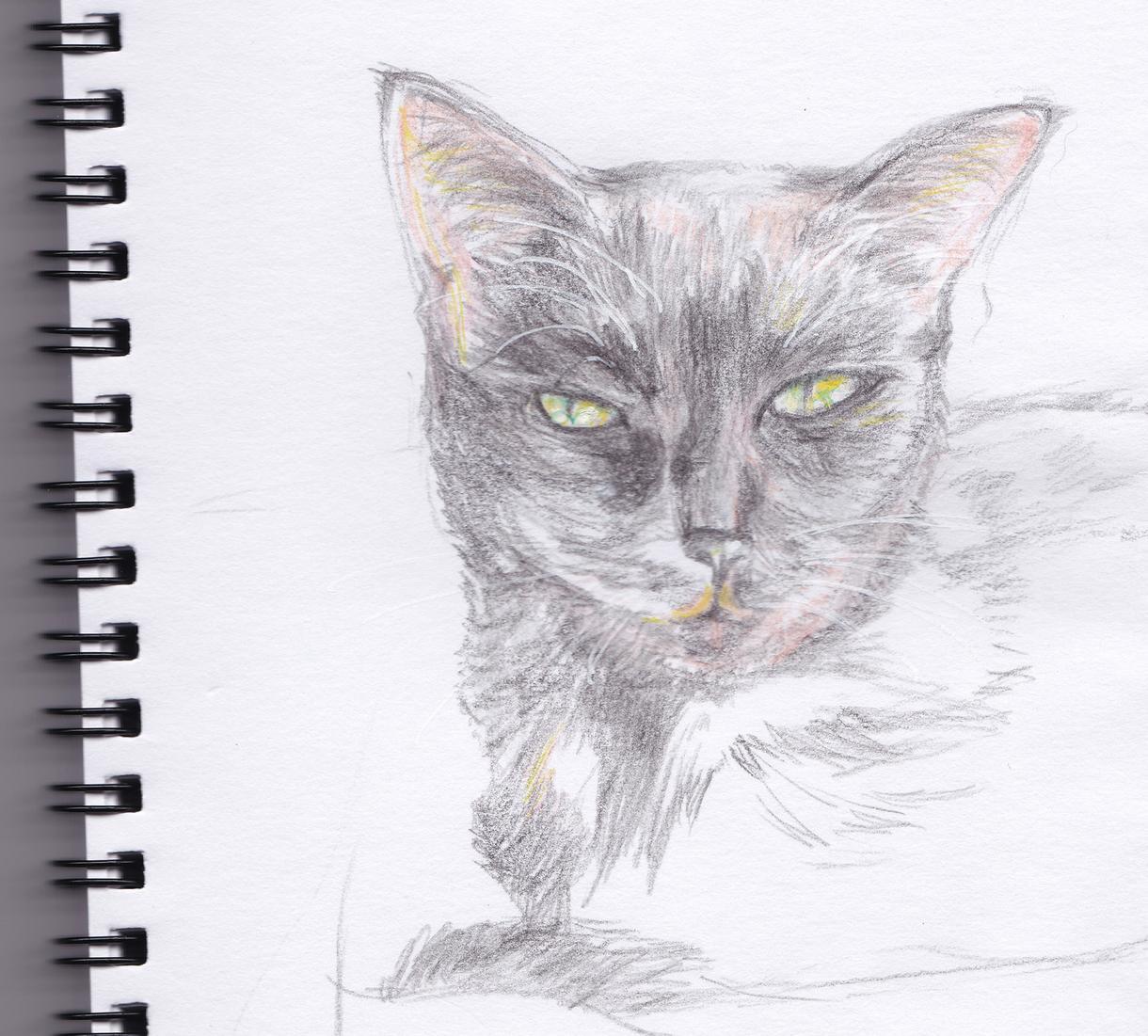 貴方の大事な魂、ペットのイラスト描かせて頂きます ペットロスの方も)貴方の家族であるペットの絵に魂を込めます