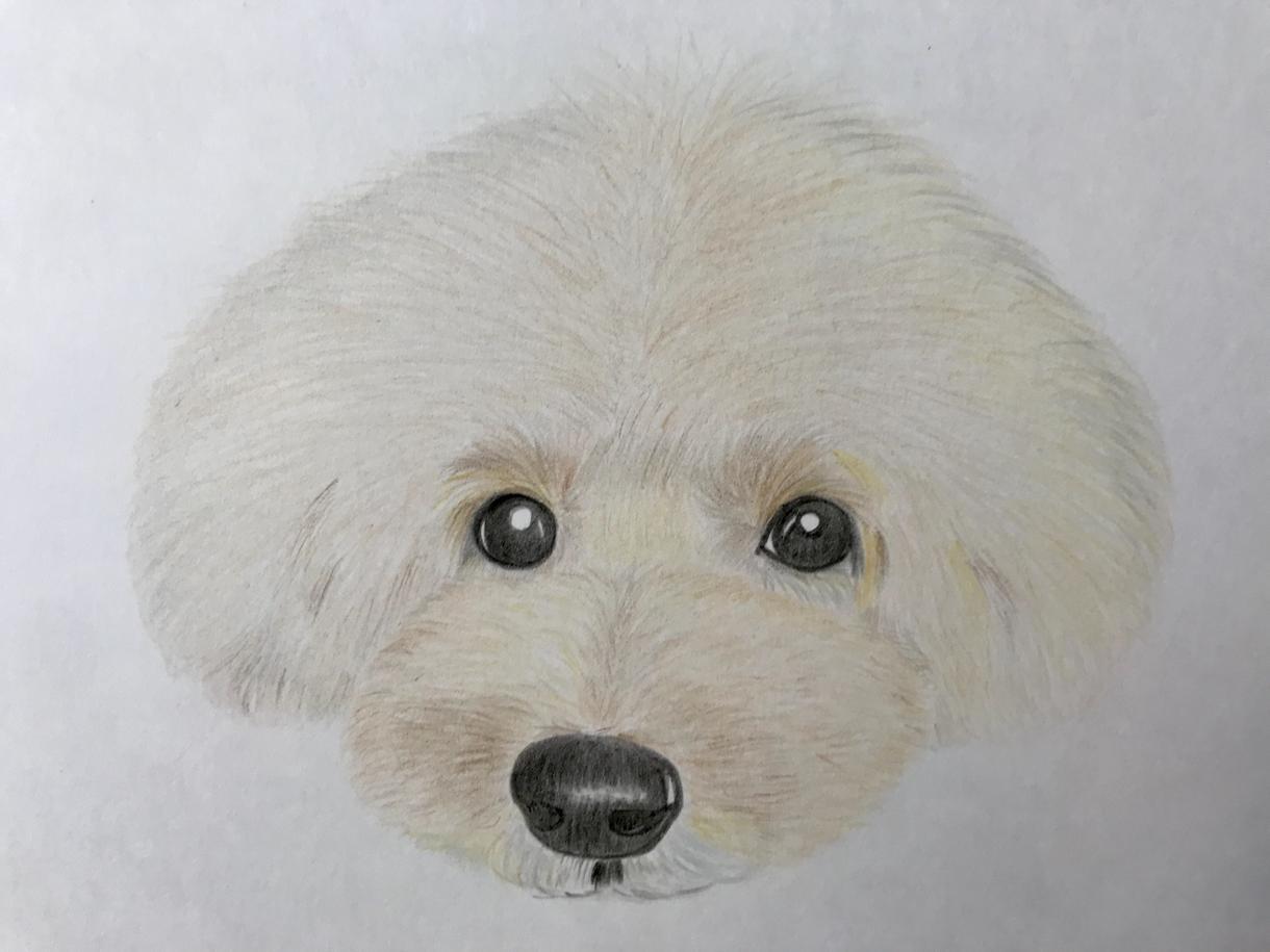 かわいいワンちゃんのイラスト描きます 色鉛筆の優しいタッチで、かわいい愛犬のイラストを描きます。