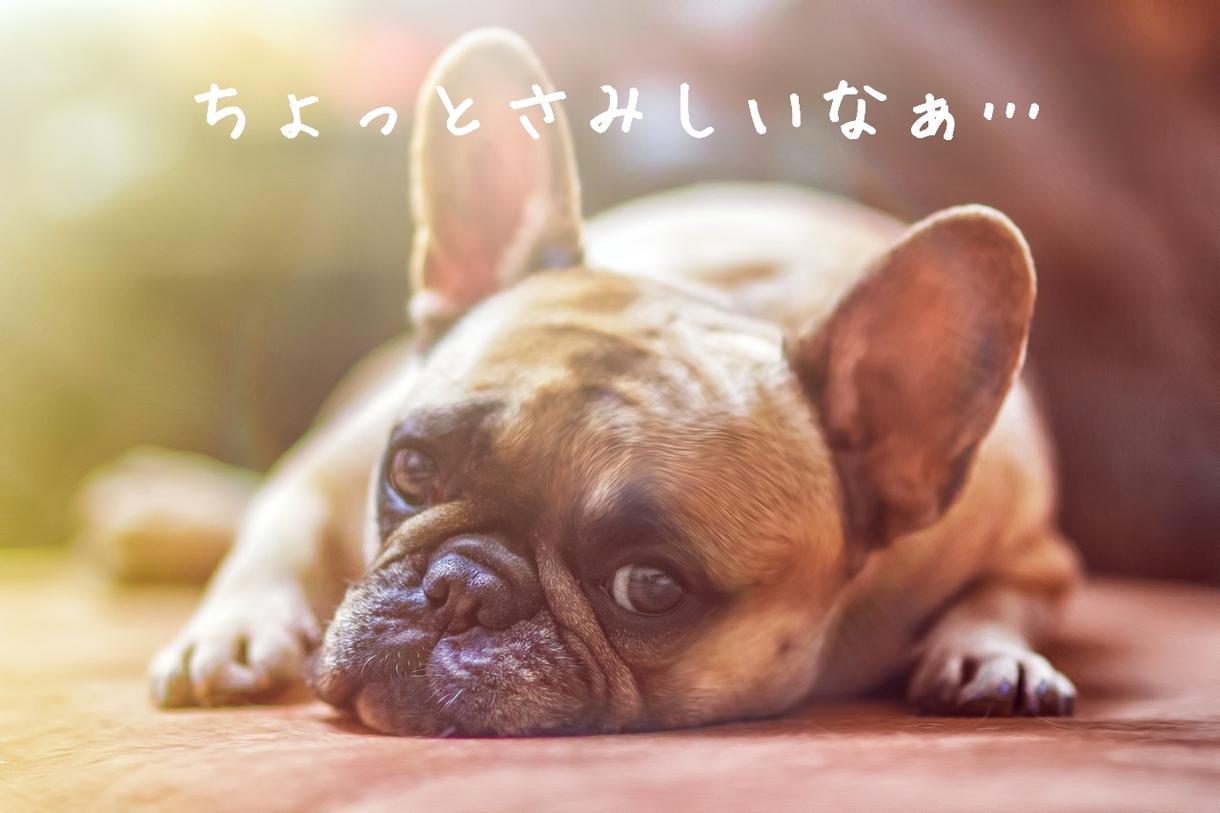可愛いペットの写真をより可愛く飾ります 大切な可愛いご家族をより可愛くしてみませんか?