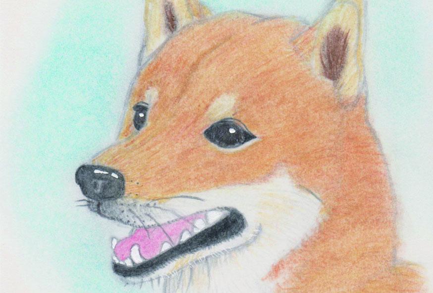色鉛筆☆可愛いペットのイラスト描きます 待ち受けにしたり、プリントして飾ることも出来ます!