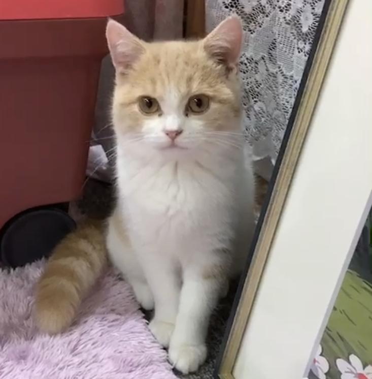 猫ちゃんの画像を格安で提供します お好みのねこちゃんの行動を写真で撮ってご提供します。