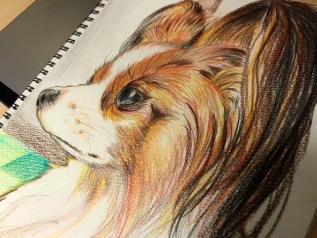色鉛筆で、あなたのペットの似顔絵を描きます 私たちより何倍も早く年を取る、大切な家族の思い出に。