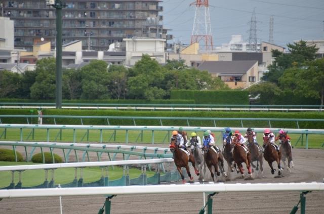 東京競馬場で使う超簡単な馬券術教えますます 競馬新聞・血統・調教など一切使用しません。オッズの確認のみ。