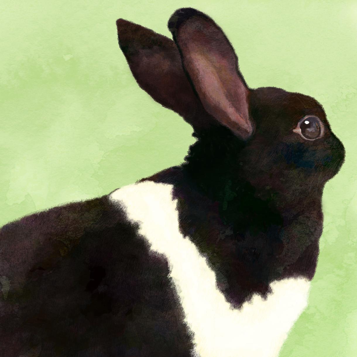 リアルタッチで動物のイラストをお描きします ペット、好きな動物のイラストがほしい方へ