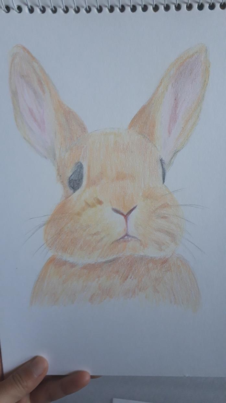動物イラスト描きます 大切なペットやお気に入りの動物、心を込めて描きます!