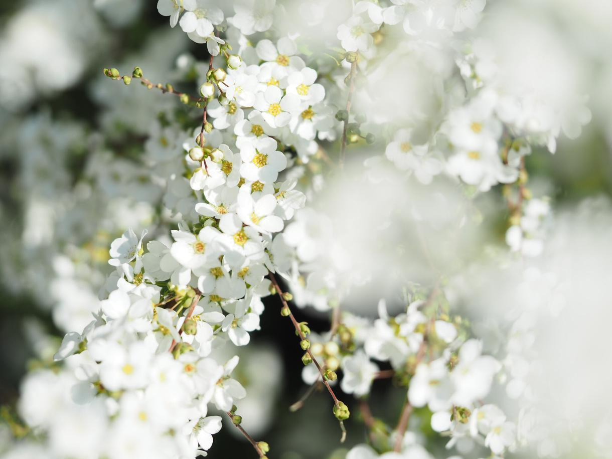 SNSなど用に花、料理、風景写真を撮影代行します ※交通費込み(東京都内)です。