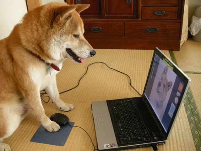 お持ちのwixホームページの編集作業を行います 更新したいけど面倒。やり方が分からない。そんな作業代行します