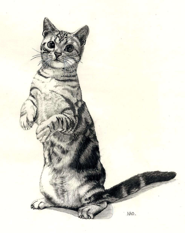 ペットのスケッチ描きます 思い出&記憶を魅力的なスケッチにしませんか? 手描き版
