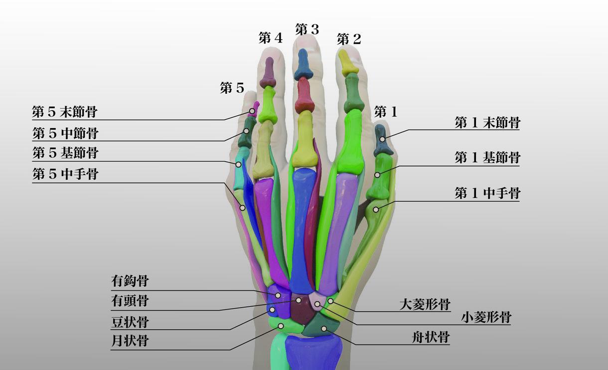 メディカルイラスト・メディカルCGを制作します 医療・学術・工業・研究用の3DCG静止画の制作 イメージ1
